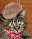 Cat Cowboy costume
