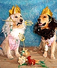 Kings Poseidon and Triton Costume for Dogs