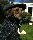 Sherlock Bones Dog Costume
