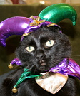 Jester Cat Costume