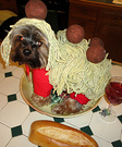 Spaghetti and Meatballs Costume Idea for Dogs