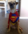Super Doggy Costume