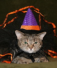 Homemade Witch Costume for Cats