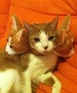 Three-headed Cat Costume