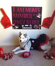 UNLV Runnin Rebel Costume for Dogs