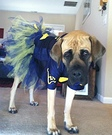Homemade Cheerleader Costume for Dogs